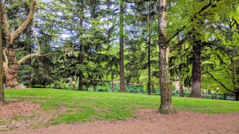 Laurelhurst Park trees